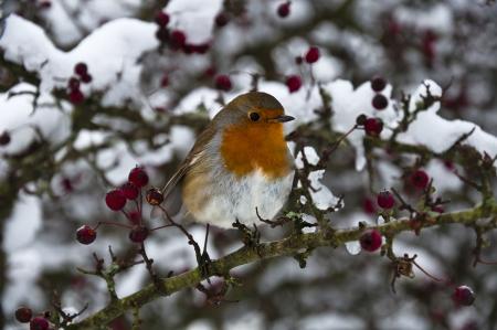 Wie Tiere wie Igel, Vögel und Insekten im Naturgarten überwintern