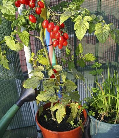 Obst und Gemüse auf dem Balkon