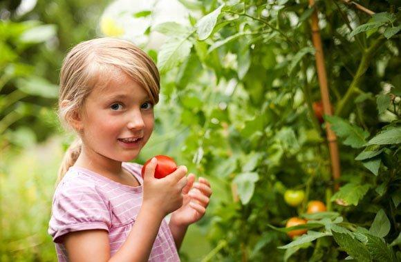 Aromatische Tomaten pflanzen mit organischer Düngung