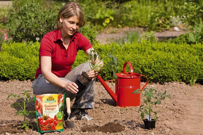 Der TomatenDünger ist voll gesunder Nährstoffe für die anspruchsvollen Pflanzen © Neudorff