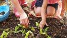 Bio-Gemüsegarten bei Deutschen im Trend