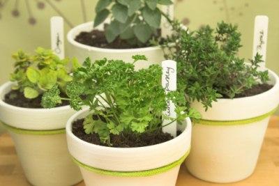 Verführerische Vielfalt: Bio-Gemüse selbst vom kleinsten Balkon
