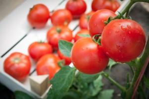 Bio Obst und Gemüse vom Balkon.