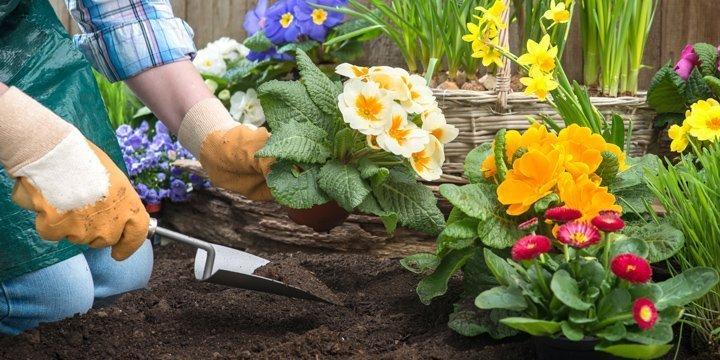 Ein schöner Garten ganz ohne Torf