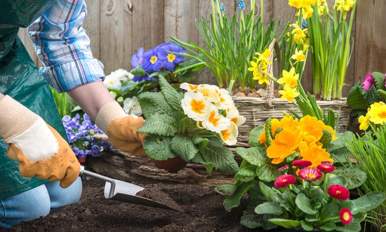 Für herkömmliche Blumenerde, wie sie im Baumarkt oder Gartencenter verkauft und von zahlreichen Hobbygärtnern verwendet wird, werden in Deutschland jedes Jahr mehrere Millionen Kubikmeter Torf benötigt.