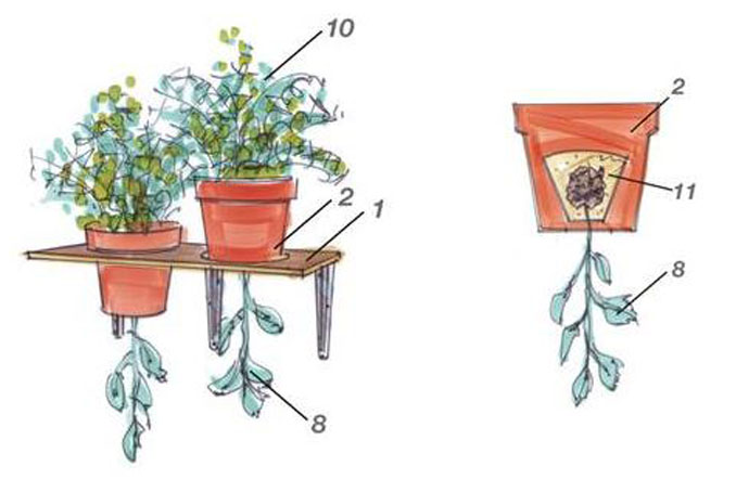 Wann kann man Tomaten pflanzen?