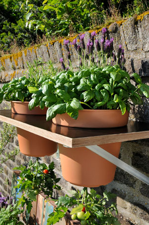 Tomaten im Garten pflanzen: Mit dieser Anleitung