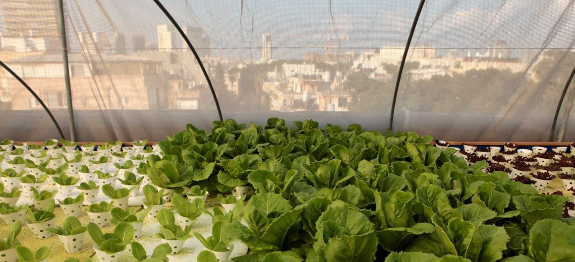 Urban Farming: Gigantische Bio-Farm auf dem Dach
