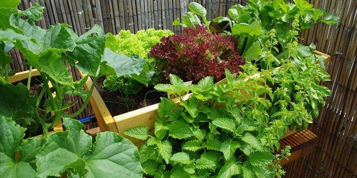 Eigene Biofarm auf dem Balkon