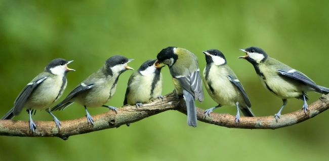 Experen empfehlen Ganzjahresfütterung von Vögeln
