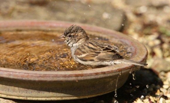 Plantschspaß für Vögel: Vogelbad und Vogeltränke einfach gemacht