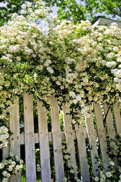 wildhecken pflanzen im naturgarten ist nachhaltig. Black Bedroom Furniture Sets. Home Design Ideas
