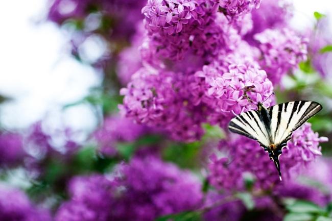 Naturgarten anlegen und Wildhecken pflanzen ist nachhaltig