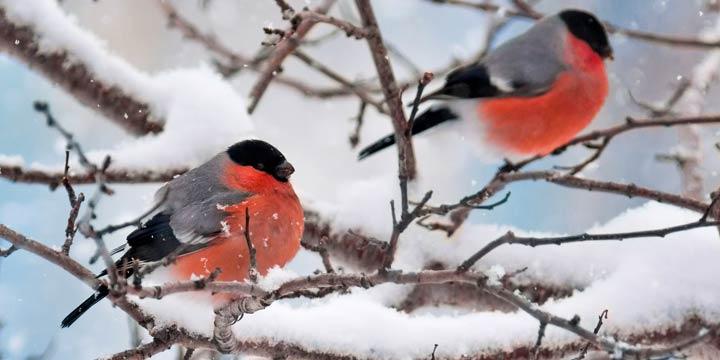 Nachhaltig: Gartenvögel zählen bei der «Stunde der Wintervögel»