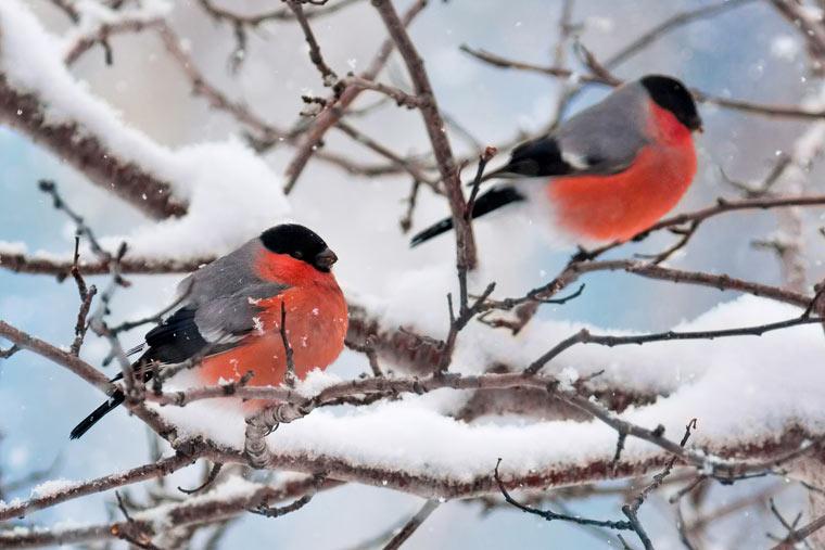 Wintervögel Deutschlands