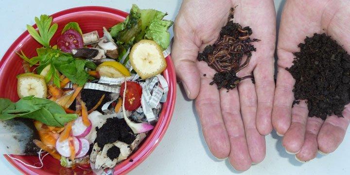 Wurmkisten: Der natürliche Kompost für den Haushalt