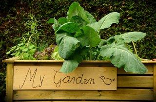 Gemüse und Obst hoch hinaus