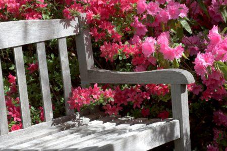 Offene Gärten oder offene Gartenpforte: Zwei Bezeichnungen für neuen Trend.
