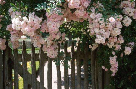 Offene Gärten oder offene Gartenpforte: Zwei Bezeichnungen für einen neuen Trend.