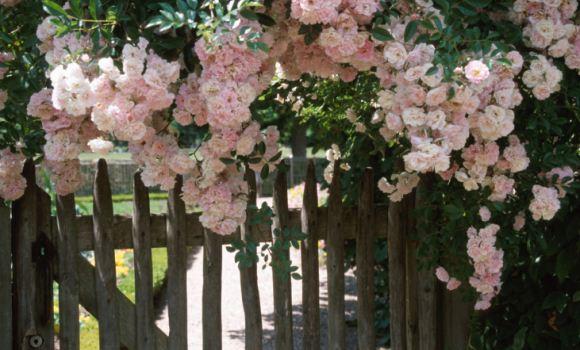Blick hinter den Zaun oder warum ist der offene Garten so beliebt?