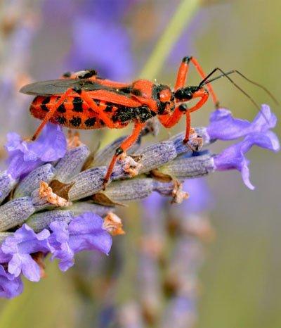 Nützlinge: Tierische Hilfe gegen Schädlinge