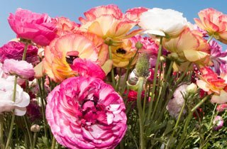 5 einzigartige Blütenpflanzen für Ihren Traumgarten