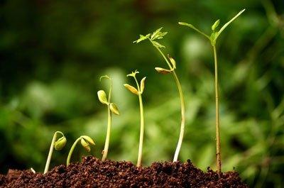Saatgut ist Kulturgut und Bio-Qualität die erste Wahl