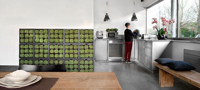 Nicht nur Kräuter, sondern auch Romanescu wächst an der Wand und ziert so die Wohnung © D&M Depot/karoo