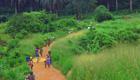 Wie Umweltprobleme und Ebola zusammenhängen