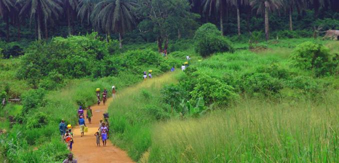 Ebola und Artenschutz hängt zusammen