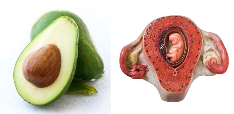 Avocado ? Gebärmutter