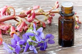 Die wichtigsten Bachblüten und ihre Wirkung