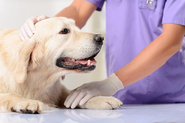 Hunde in der Krebsforschung