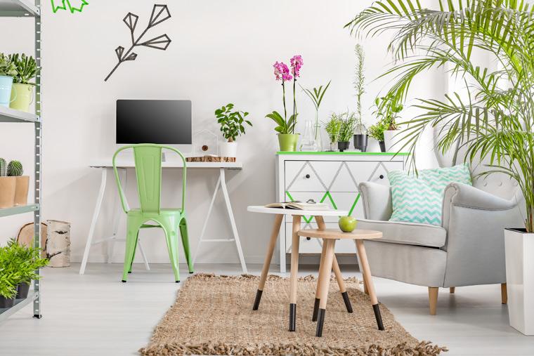 Biro mit Zimmerpflanzen