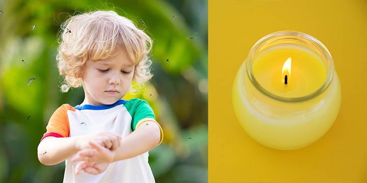 Gegen Stechmücken: Diese natürlichen Zitronella-Kerzen und Cremes helfen