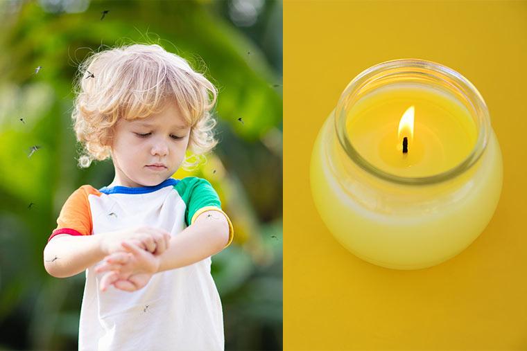 Citronella Kerze gegen Stechmücken
