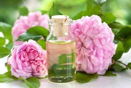 damaszener rose rosa damascena heilpflanze 2013. Black Bedroom Furniture Sets. Home Design Ideas