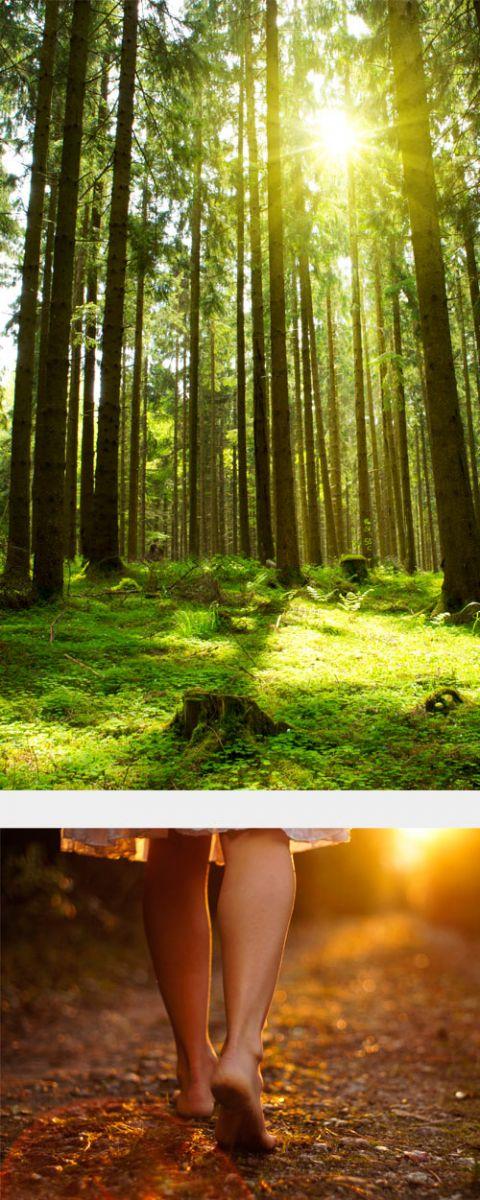 Digital Detox Seminar im Wald