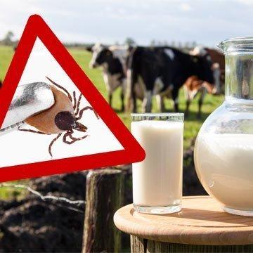 FSME: Auch Rohmilch kann das Zecken-Virus übertragen