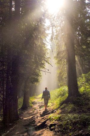 Langer Waldspaziergang für eine starke Gesundheit