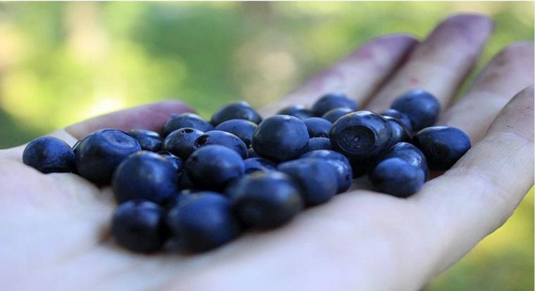 Sind die Goji- oder Açaí-Beere nährstoffreicher als die Heidelbeere?