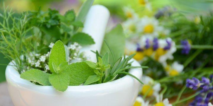 Kennen Sie die wichtigsten Heilpflanzen und Heilkräuter?