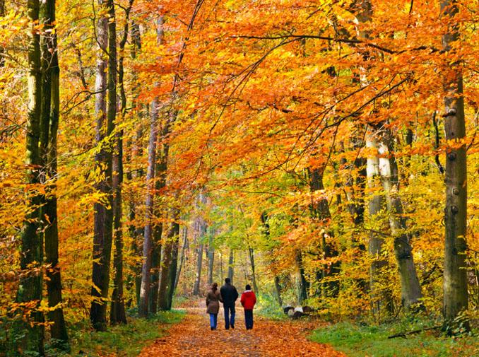 Immunabwehr stärken im Herbst: mit einem gemütlichen Waldspaziergang