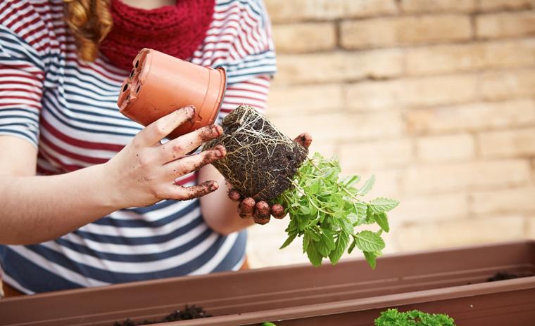 Am besten ist es, frische Kräuter in der Küche selbst anzupflanzen ? so hat man immer den passenden ?Fatburner? für jedes Gericht im Haus.