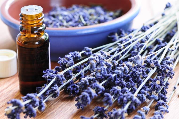 Lavendelöl gegen generelle Ängste