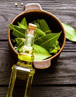 7 Tipps: Die heilende Wirkung von Lorbeer als Heilpflanze