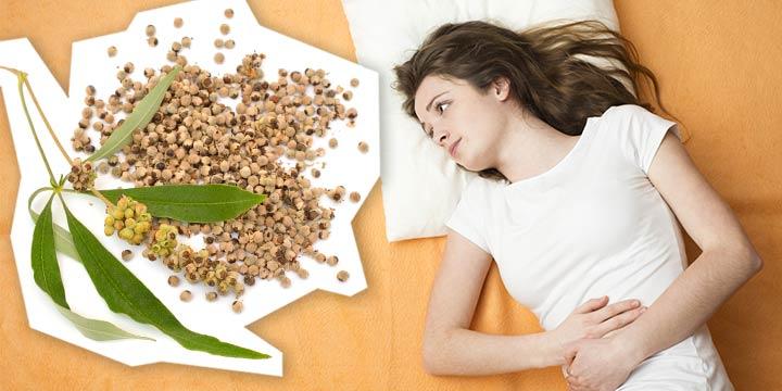 Mönchspfeffer: Wie die Pflanze den weiblichen Zyklus unterstützen kann
