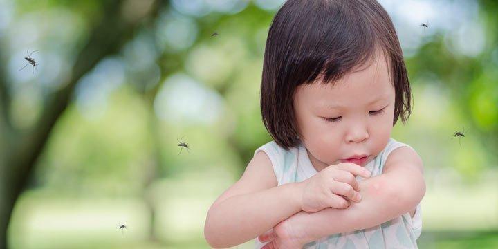 Mückenplage: So schlimm wird der Spätsommer