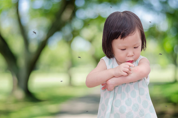 Mückenplage: So schlimm wird der Sommer