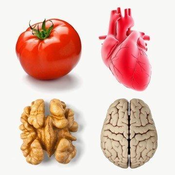 7 Nahrungsmittel, die wie Organe aussehen und auch gut dafür sind!